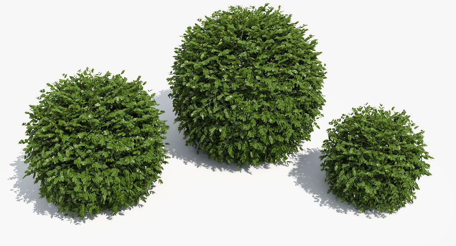 3 Boxwood Balls Set royalty-free 3d model - Preview no. 10