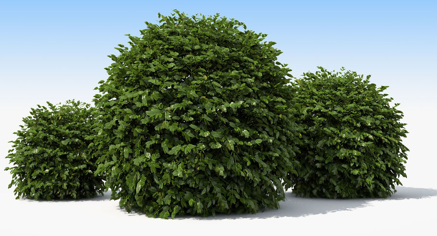 3 Boxwood Balls Set royalty-free 3d model - Preview no. 12