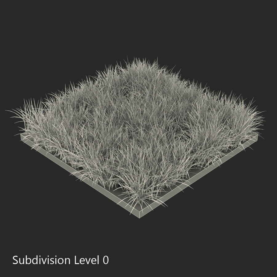 Ryegrass royalty-free 3d model - Preview no. 11