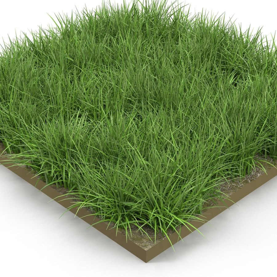 Ryegrass royalty-free 3d model - Preview no. 5