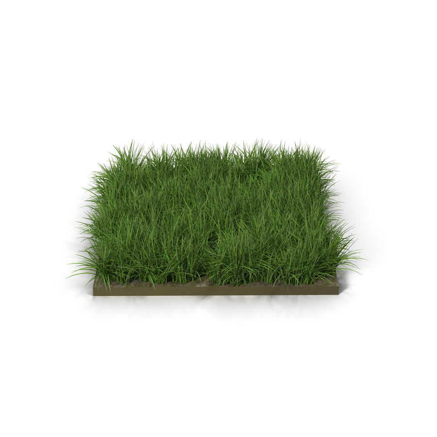 Ryegrass royalty-free 3d model - Preview no. 2