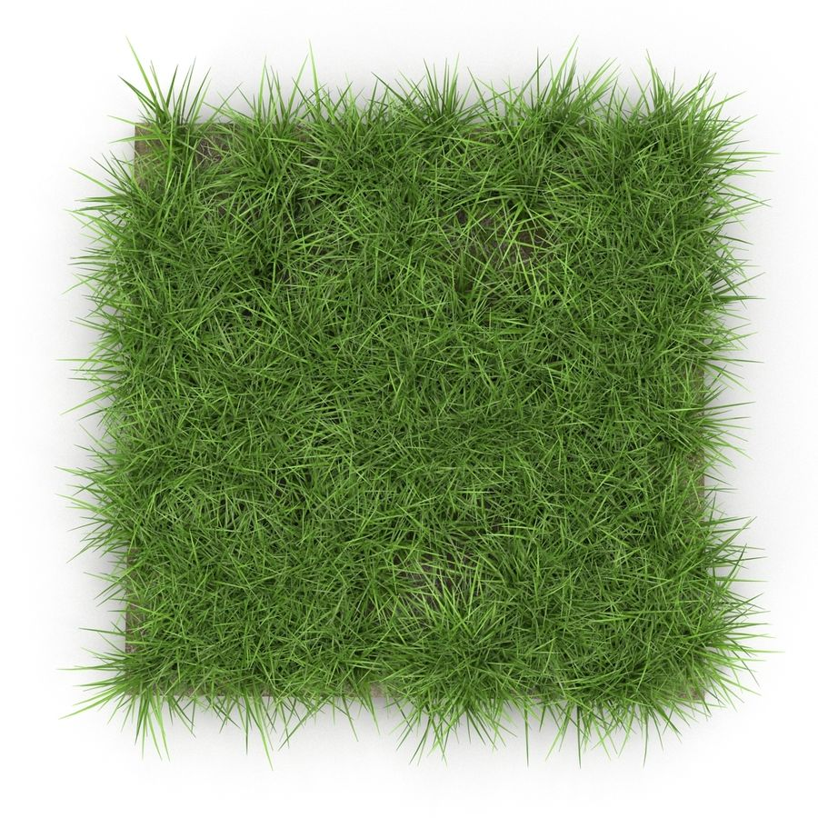 Ryegrass royalty-free 3d model - Preview no. 3