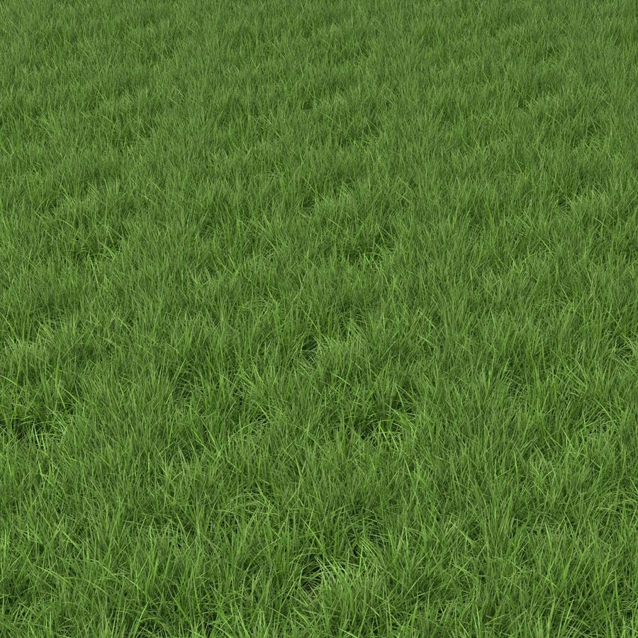 Ryegrass royalty-free 3d model - Preview no. 4