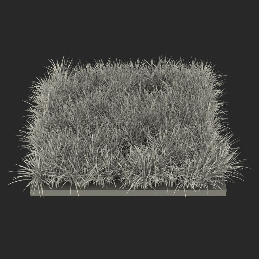 Ryegrass royalty-free 3d model - Preview no. 16