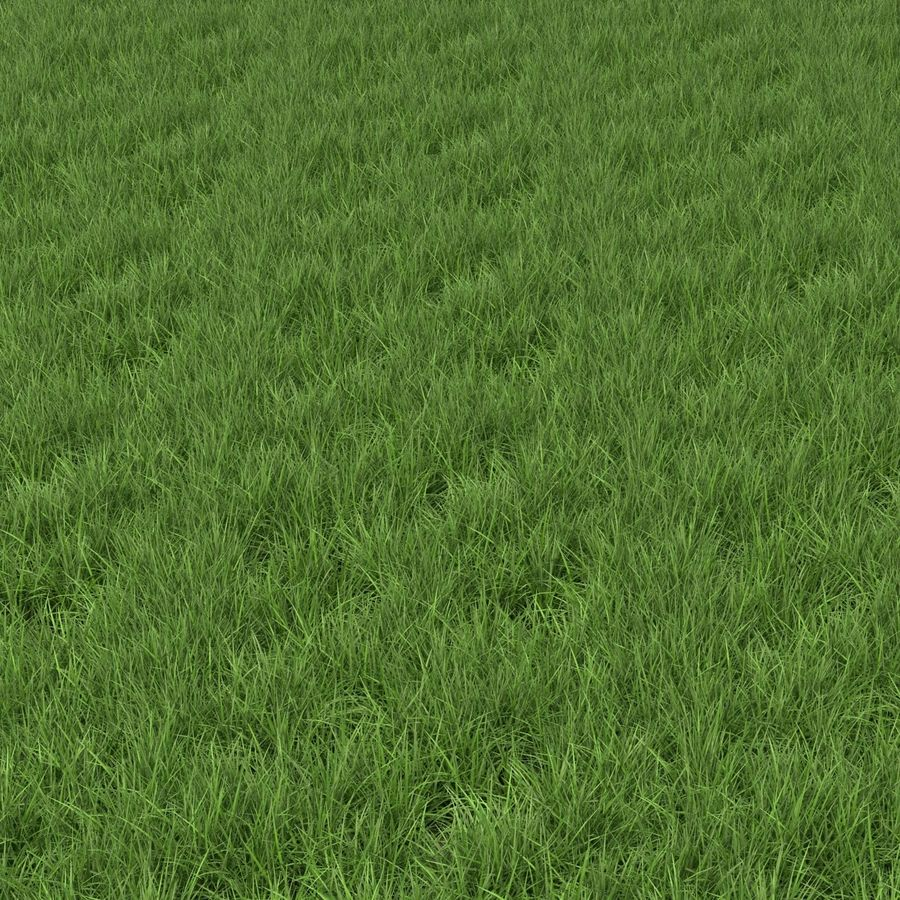 Ryegrass royalty-free 3d model - Preview no. 10