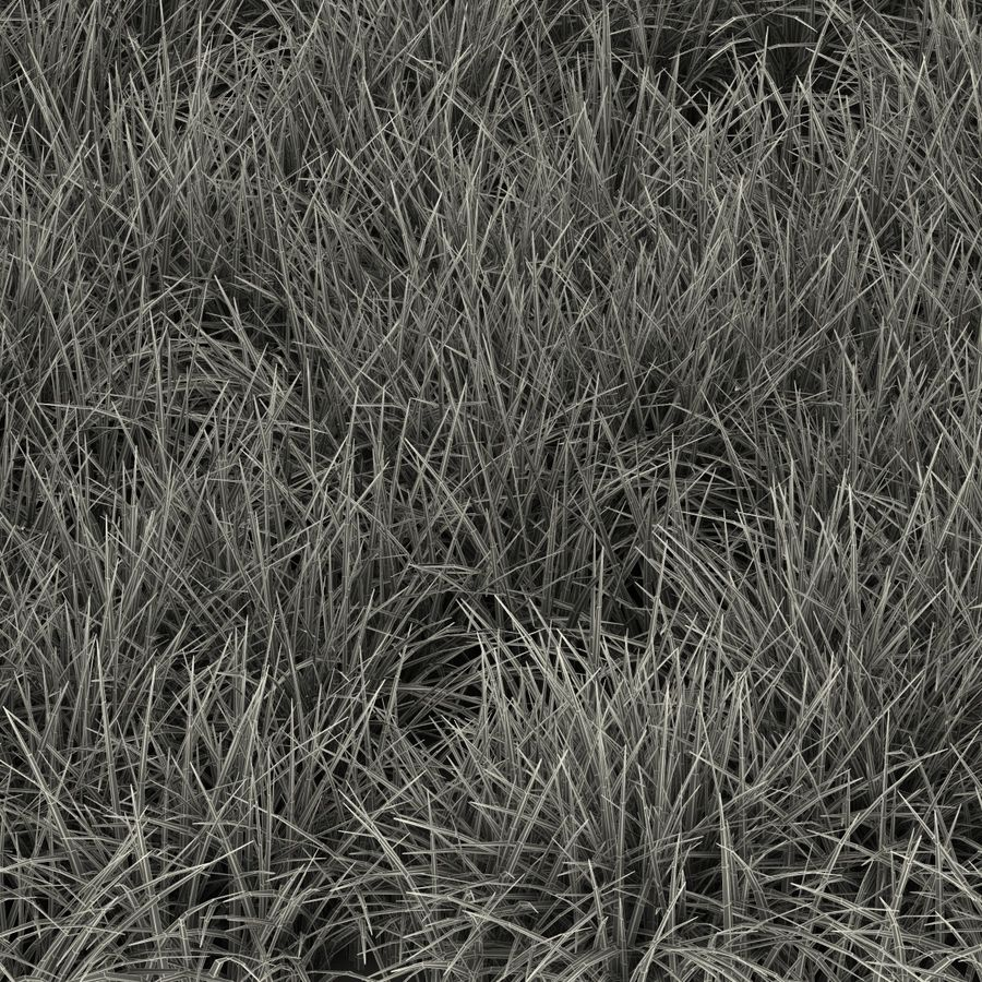 Ryegrass royalty-free 3d model - Preview no. 19
