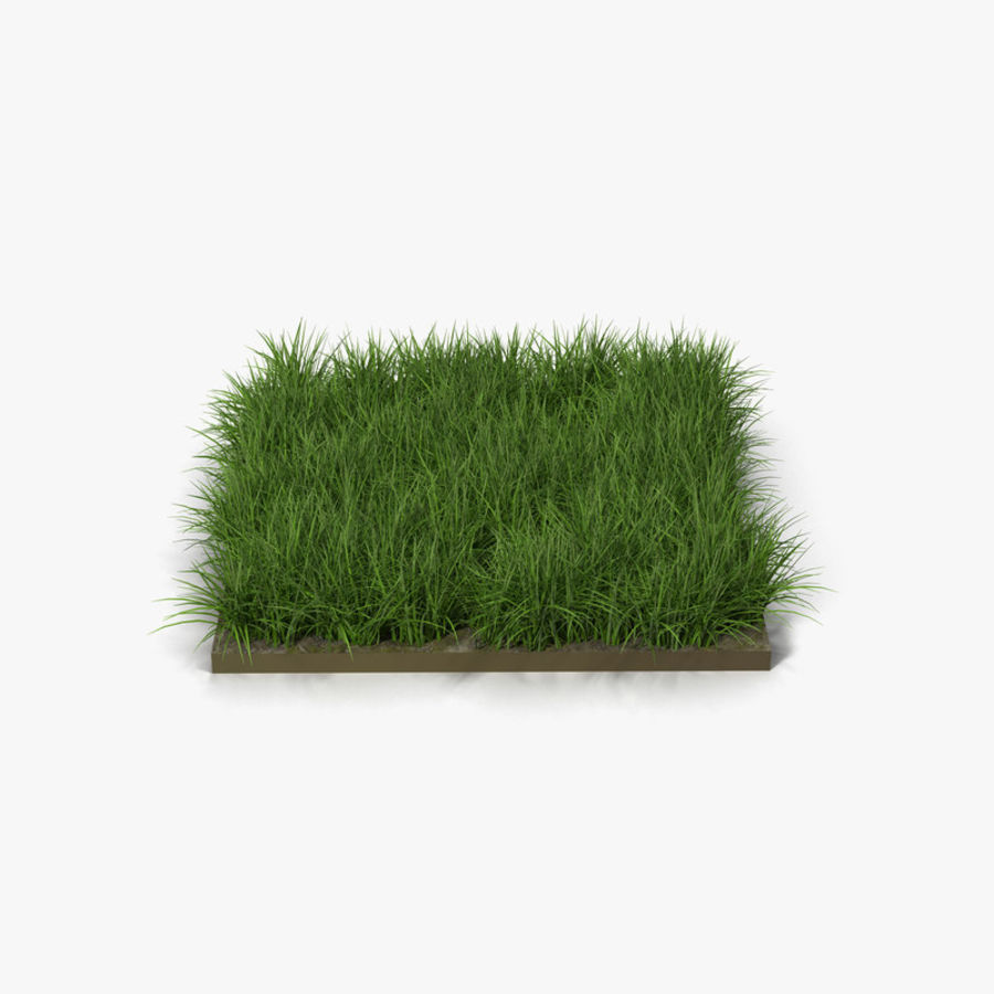 Ryegrass royalty-free 3d model - Preview no. 1