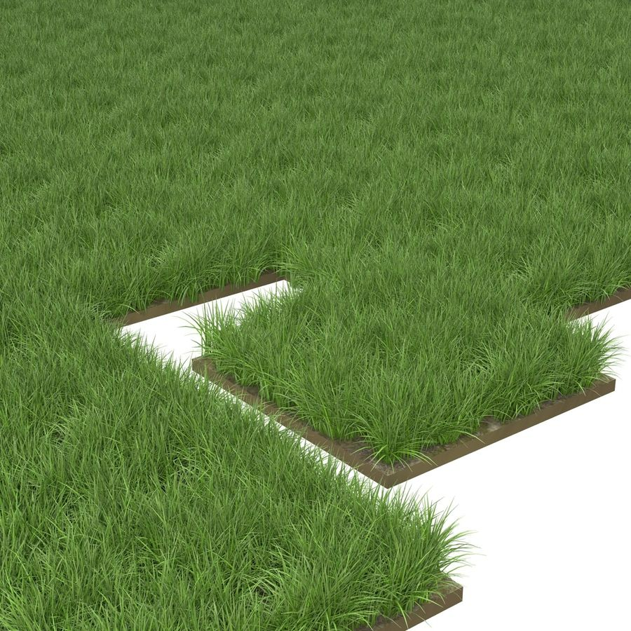 Ryegrass royalty-free 3d model - Preview no. 7