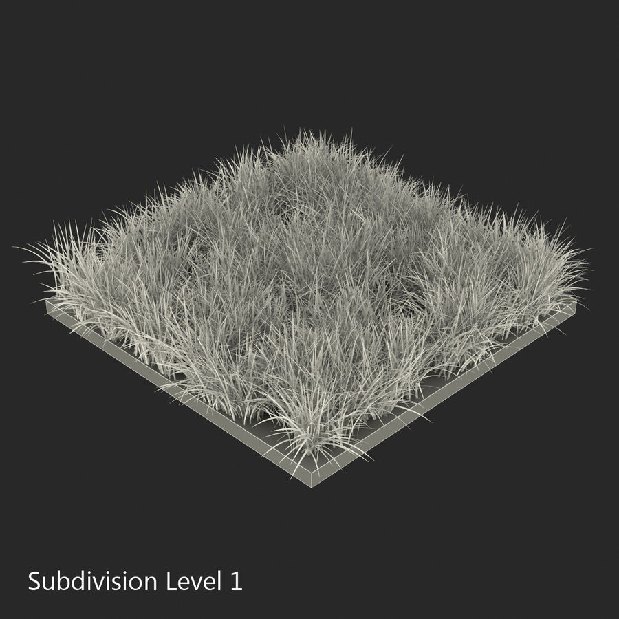 Ryegrass royalty-free 3d model - Preview no. 12