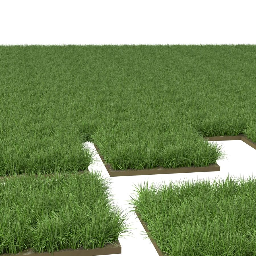 Ryegrass royalty-free 3d model - Preview no. 9