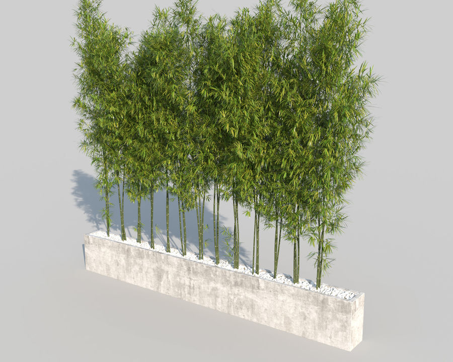 Bamboo Trees 2 royalty-free 3d model - Preview no. 4