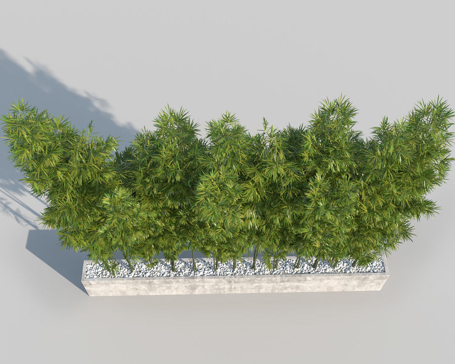 Bamboo Trees 2 royalty-free 3d model - Preview no. 5
