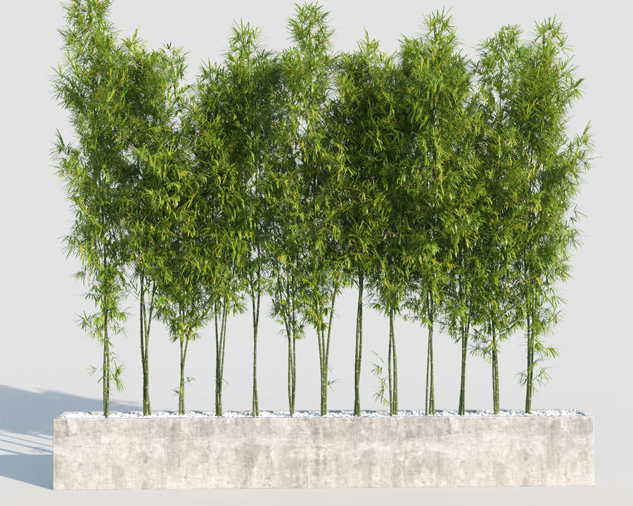Bamboo Trees 2 royalty-free 3d model - Preview no. 3