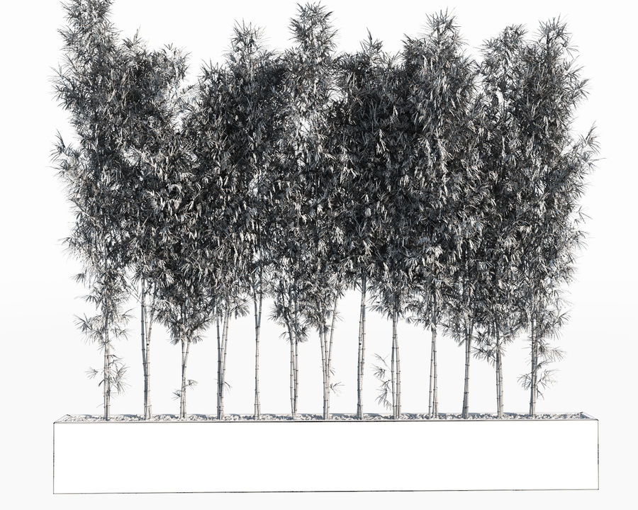 Bamboo Trees 2 royalty-free 3d model - Preview no. 10