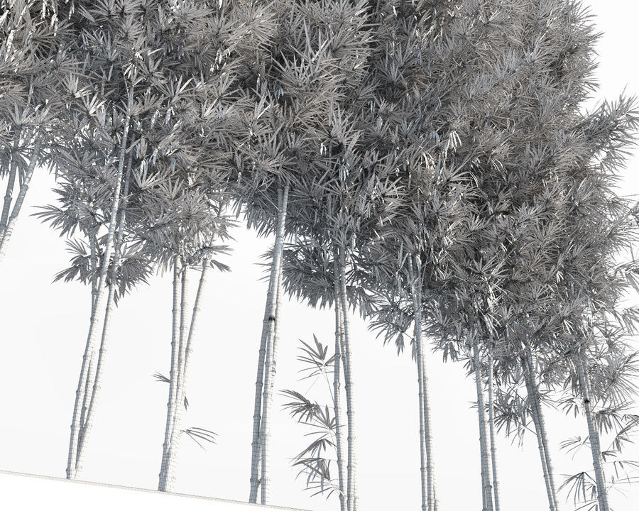 Bamboo Trees 2 royalty-free 3d model - Preview no. 15