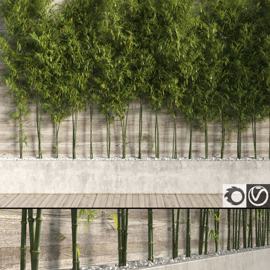 Bamboo Trees 2 royalty-free 3d model - Preview no. 1