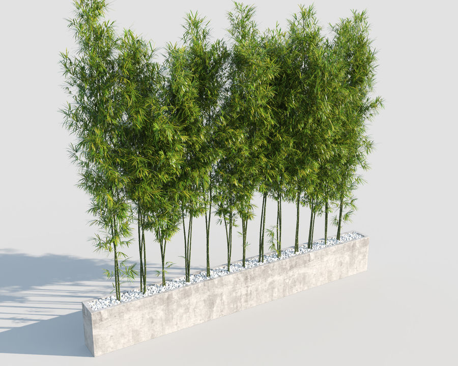 Bamboo Trees 2 royalty-free 3d model - Preview no. 2