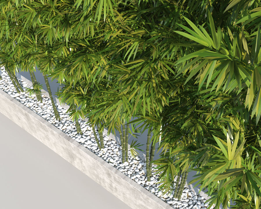 Bamboo Trees 2 royalty-free 3d model - Preview no. 8