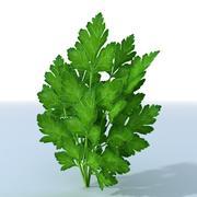 Parsley Herb 3d model