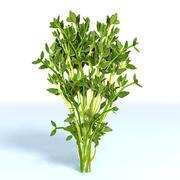 Thyme Herb 3d model