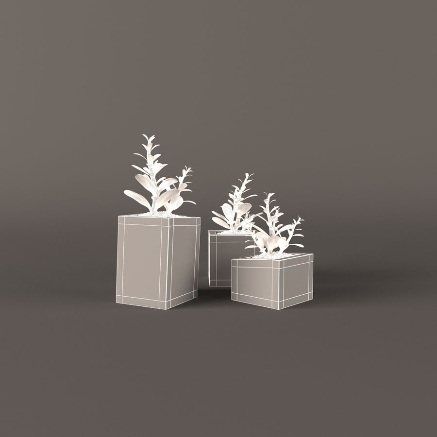 Plant money tree royalty-free 3d model - Preview no. 5