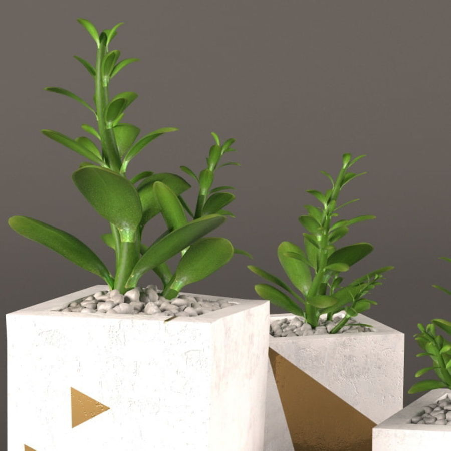 Plant money tree royalty-free 3d model - Preview no. 2