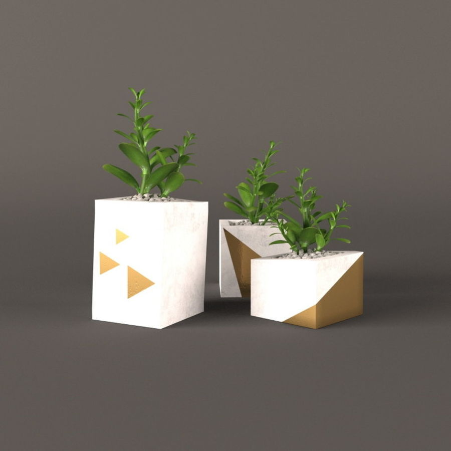Plant money tree royalty-free 3d model - Preview no. 4