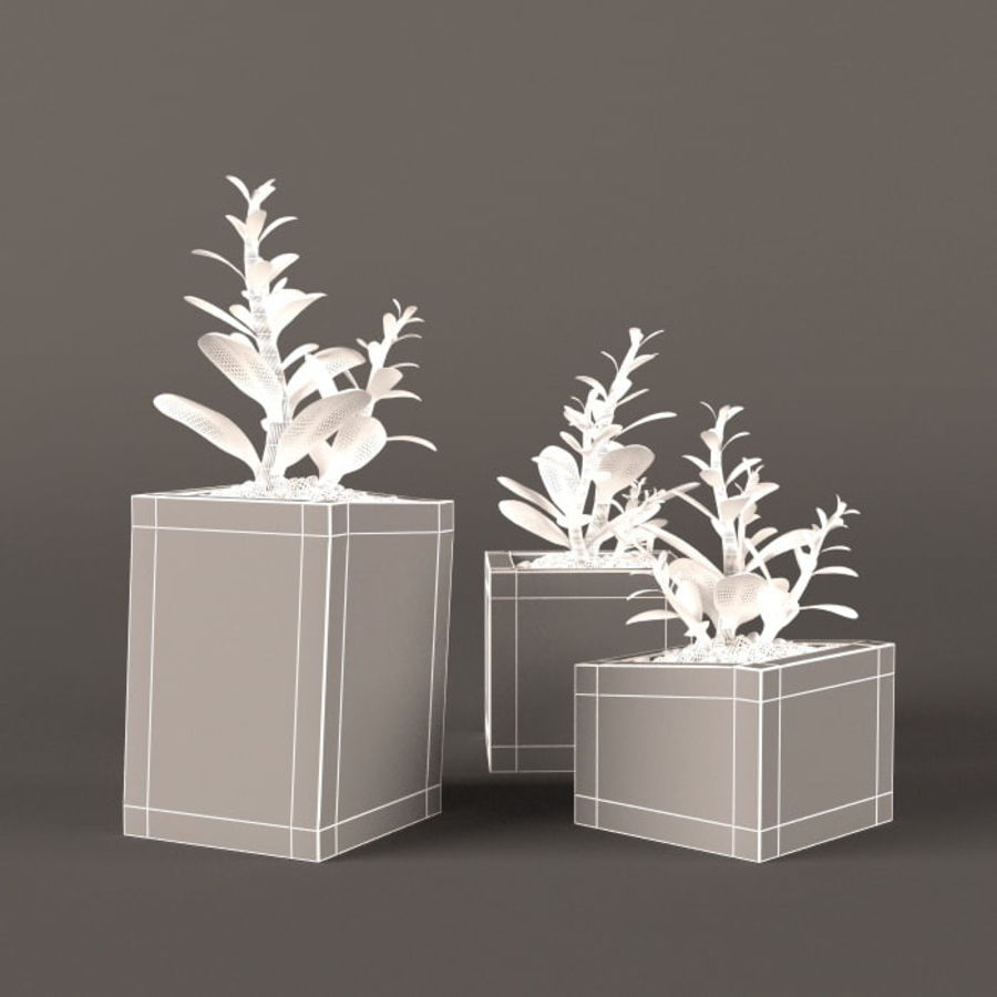 Plant money tree royalty-free 3d model - Preview no. 3