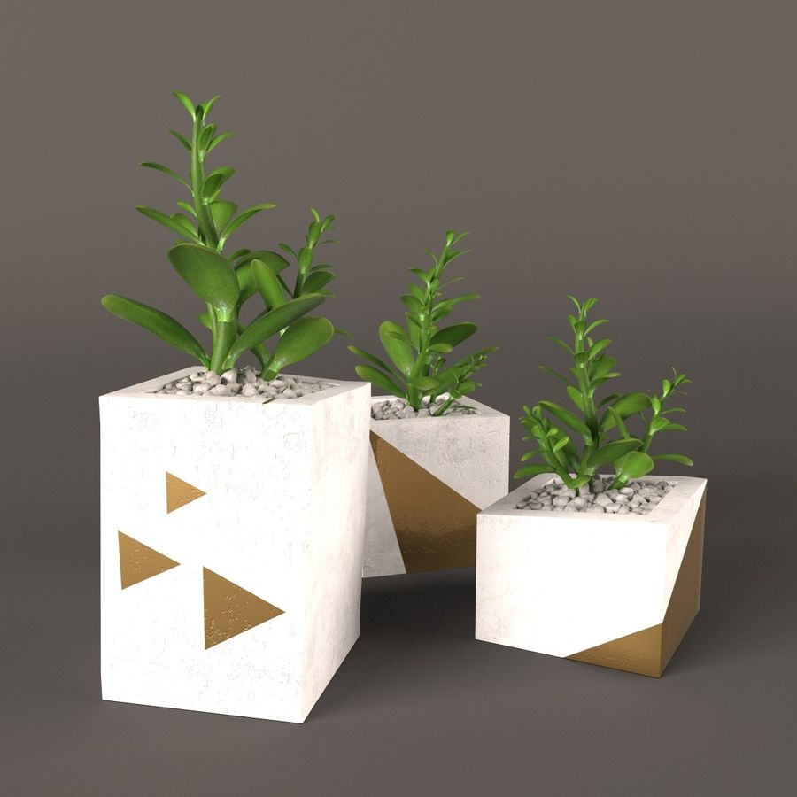 Plant money tree royalty-free 3d model - Preview no. 1