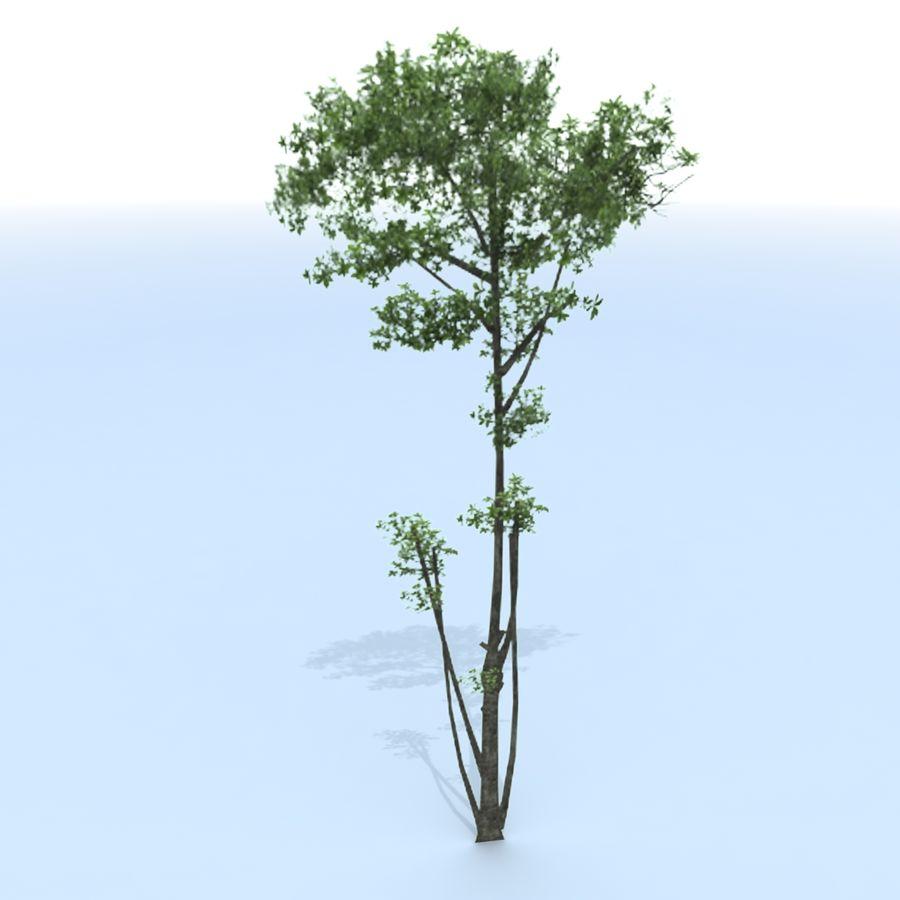 träd royalty-free 3d model - Preview no. 4