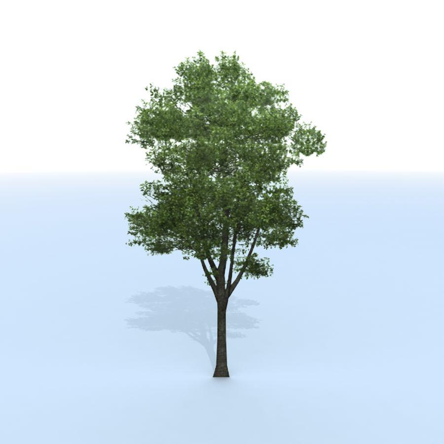 träd royalty-free 3d model - Preview no. 7