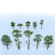 bomen 3d model