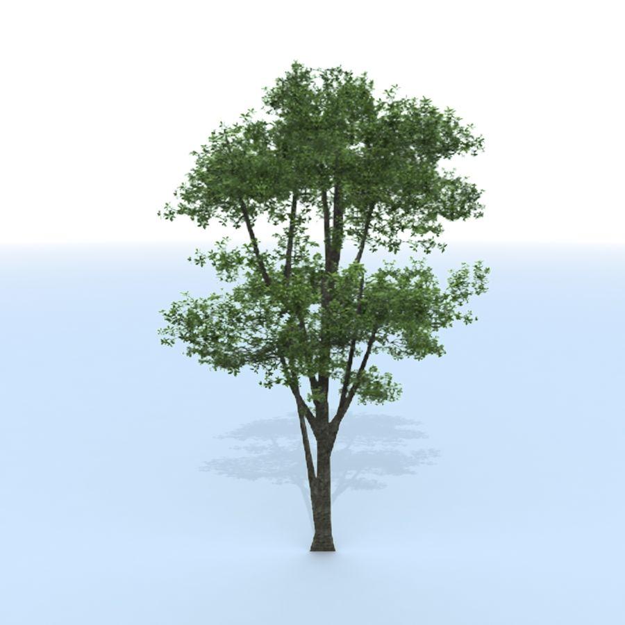 träd royalty-free 3d model - Preview no. 9