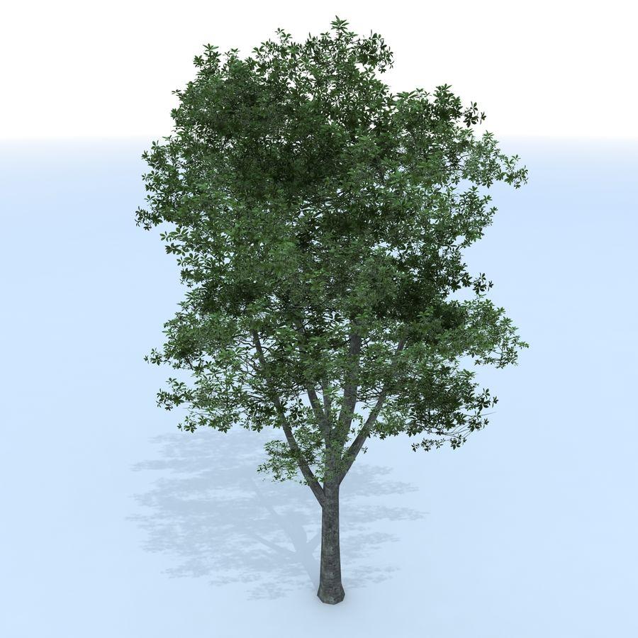 träd royalty-free 3d model - Preview no. 2