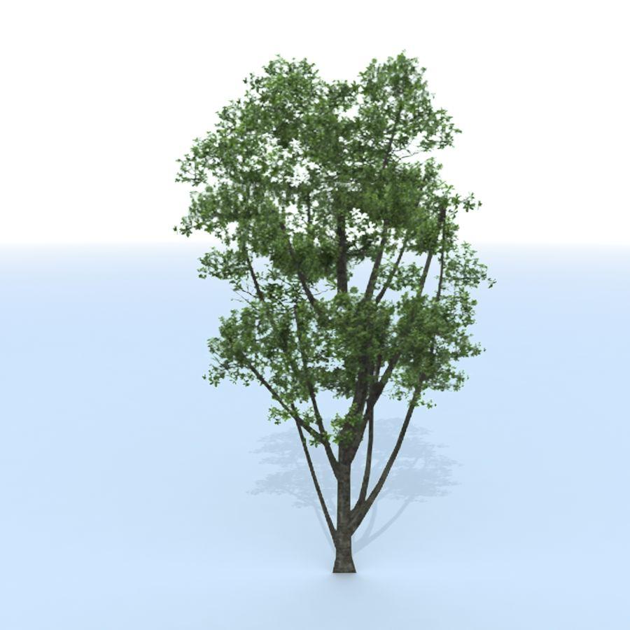 träd royalty-free 3d model - Preview no. 10