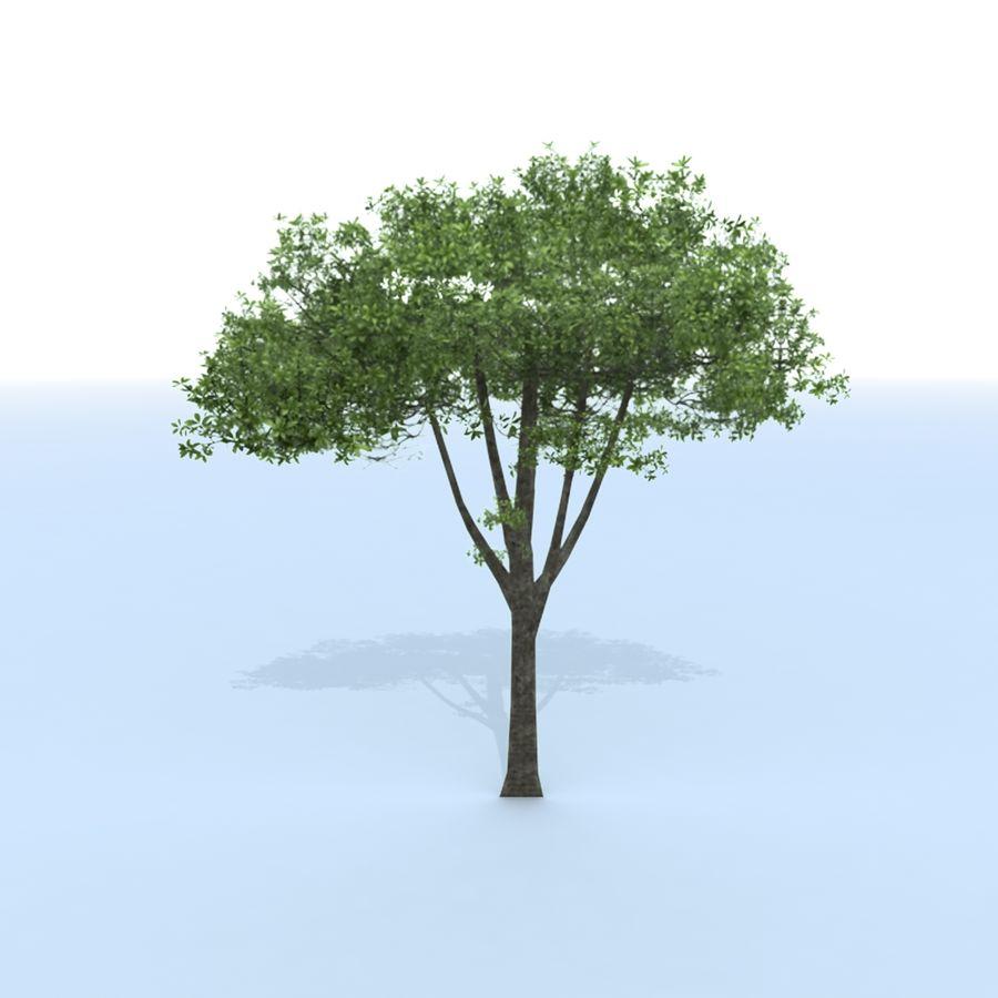 träd royalty-free 3d model - Preview no. 8