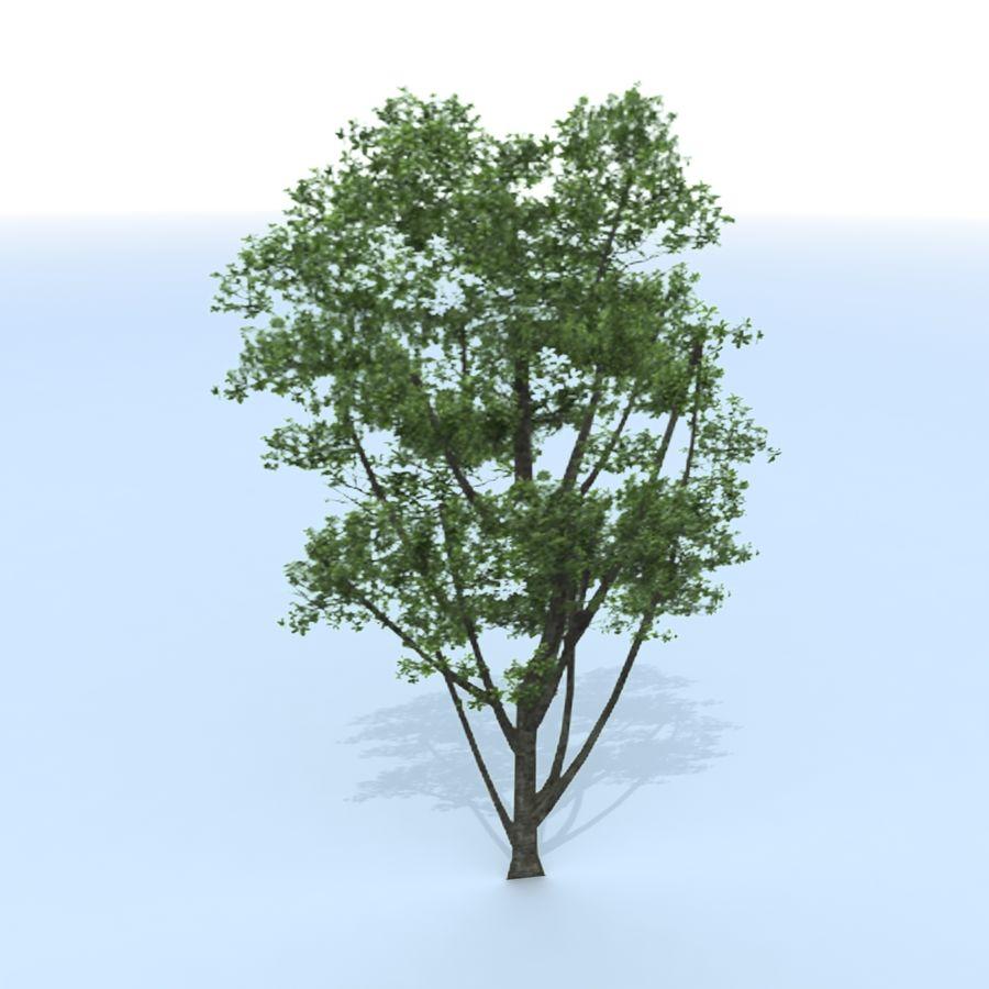 träd royalty-free 3d model - Preview no. 6