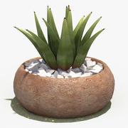 Versier plant 2 3d model