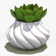 Decorate Plant 4 3d model