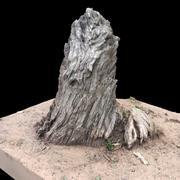 Stary pień drzewa 3d model