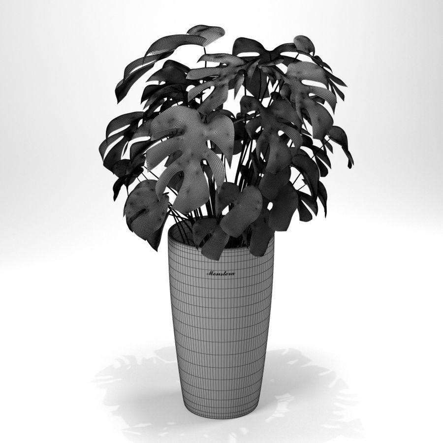 龟背竹 royalty-free 3d model - Preview no. 13