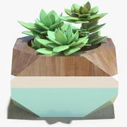 Decorate Plant 1 3d model