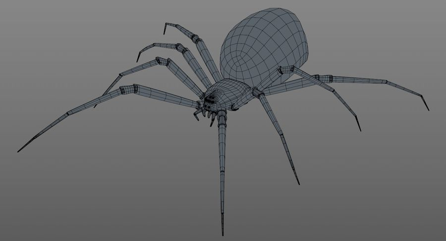 Black Widow Spider royalty-free 3d model - Preview no. 17