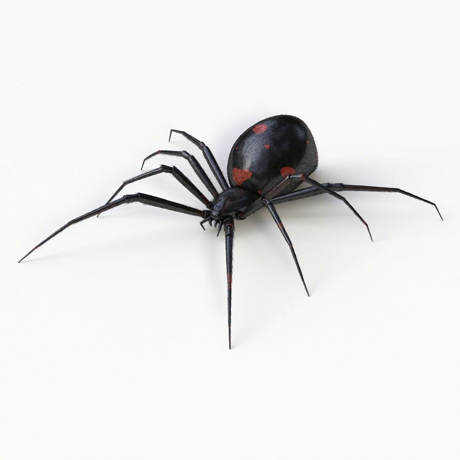 Black Widow Spider royalty-free 3d model - Preview no. 1