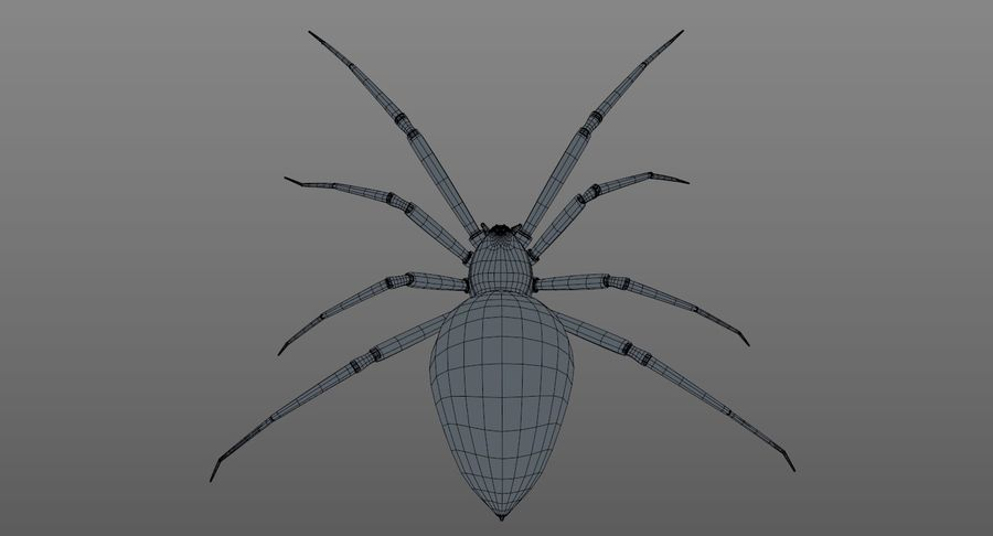 Black Widow Spider royalty-free 3d model - Preview no. 19