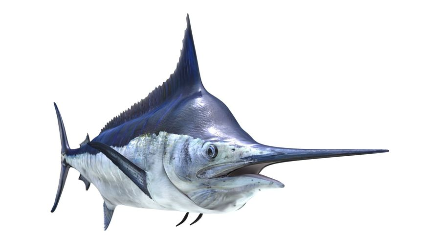 Alto diseño detallado de pescado marlin Rodio Plateado Gemelos en una caja X2AJ640