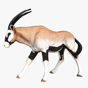 Oryx 3d model