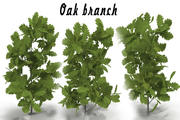 Oak branch 3d model
