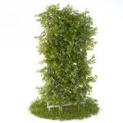 Meerjarige klimplant voor in de tuin 3d model