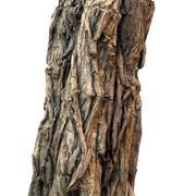 Tree Bark Brown 3d model